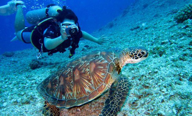 aquatic-animal-coral-diver-1645028 (Large)